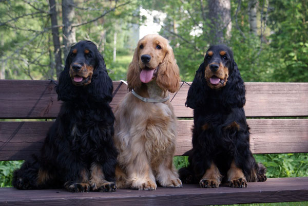 Kolme koiraa